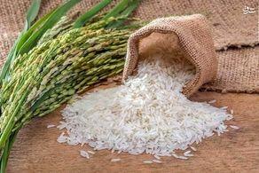 لغو ممنوعیت فصلی واردات برنج در سال جاری