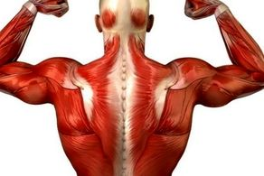 دلایل تحلیل ماهیچههای بدن