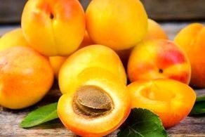 مرگ 100درصدی انسان با خوردن هسته این میوه!