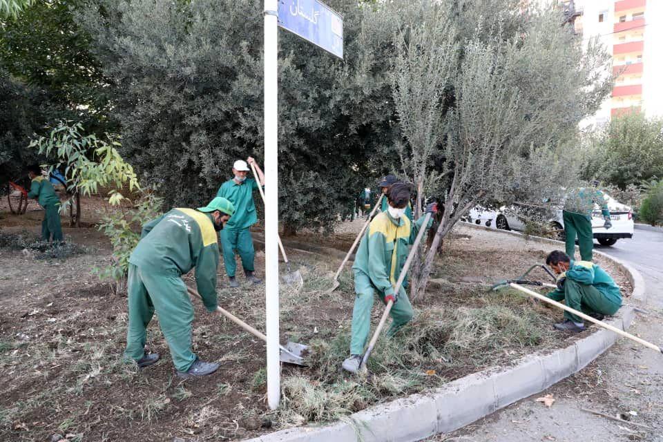 آغاز عملیات به زراعی فضای سبز منطقه 13 و هرس ترون