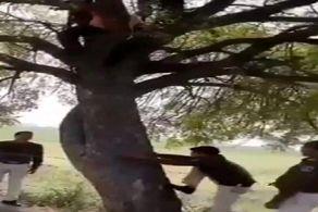 دستگیری دزد فراری روی درخت!