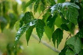 بارش بارانهای شدید موسمی در راه است