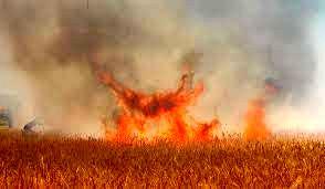 ۸۰ هکتار از مزارع گندم و جو کرمانشاه در آتش سوخت