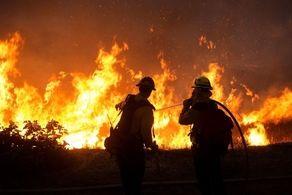 پرونده های مقصرین آتش سوزیها به مراجع قضایی ارجاع شد/ هشدار برای نابودی برخی گونههای گیاهی