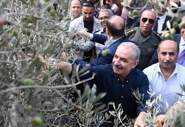 جنایت دیگر اسرائیلیها فاش شد/ صهیونیستها حتی به این موجودات هم رحم نکردند!