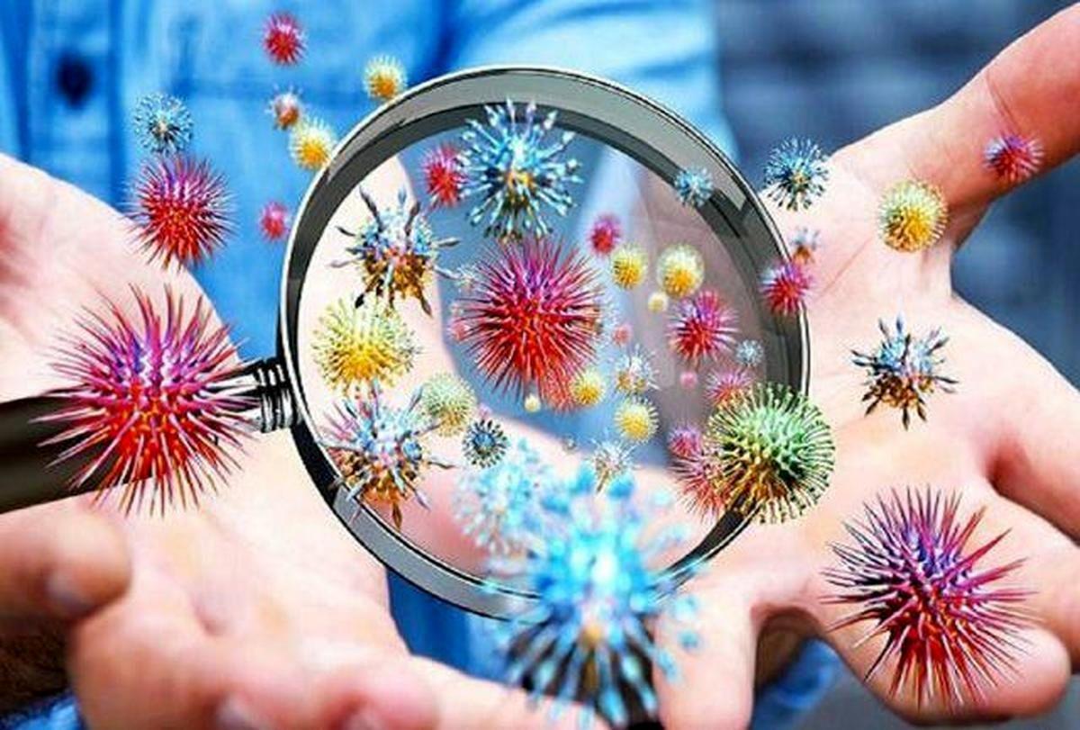 رشد ویروس ها در بدن سایر موجودات چگونه است؟