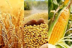 واردات مواد غذایی چین رکورد زد