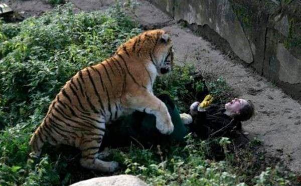 حمله هولناک یک ببر وحشی به زن جوان + عکس