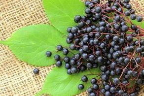 هشدار؛ زیاده روی در خوردن این میوهها مرگ آور است