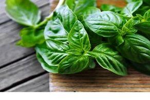 به جای استفاده از پشه کش این سبزی را امتحان کنید!