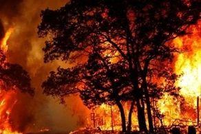 دادستانی کل کشور برای مهار حریق در جنگلها و مراتع ورود کند/ بروز حریق گسترده در جنگلها و مراتع کشور