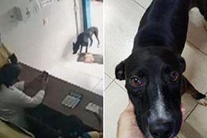 سگ سرطانی با پای خود به کلینیک دامپزشکی رفت!