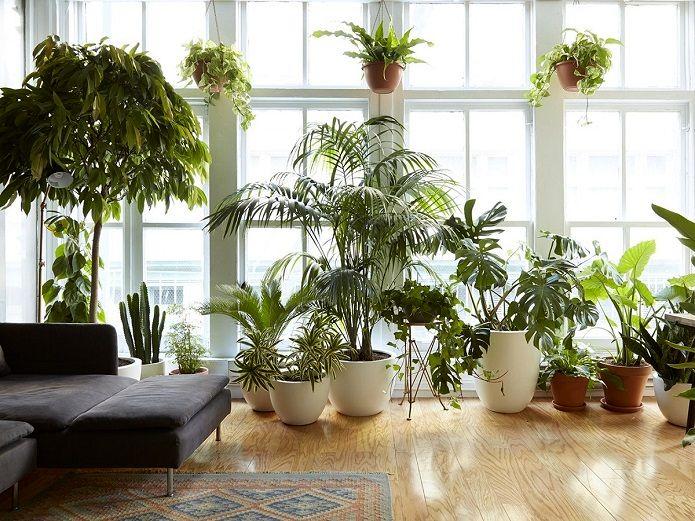 با این گیاهان هوای خانه را تصفیه کنید