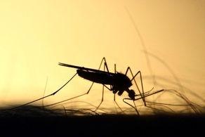 رهایی عجیب پشههای آمریکایی!